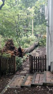 arborbuds tree service 2017